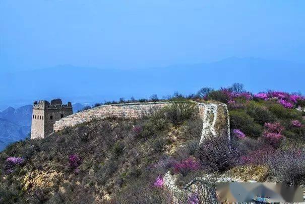 """这片被遗忘的山谷已经美出天际!人少景美,被誉为北京长城边的""""杏花谷""""花.."""
