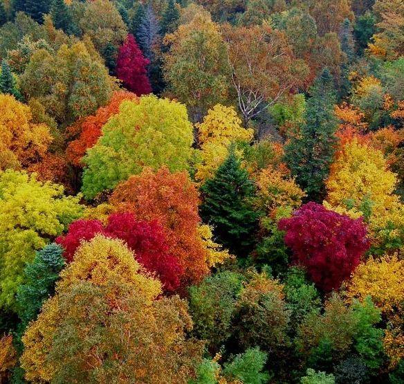 最美的秋天来临! 欣赏秋景的几个好地方!